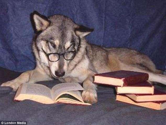 Perro leyendo libros